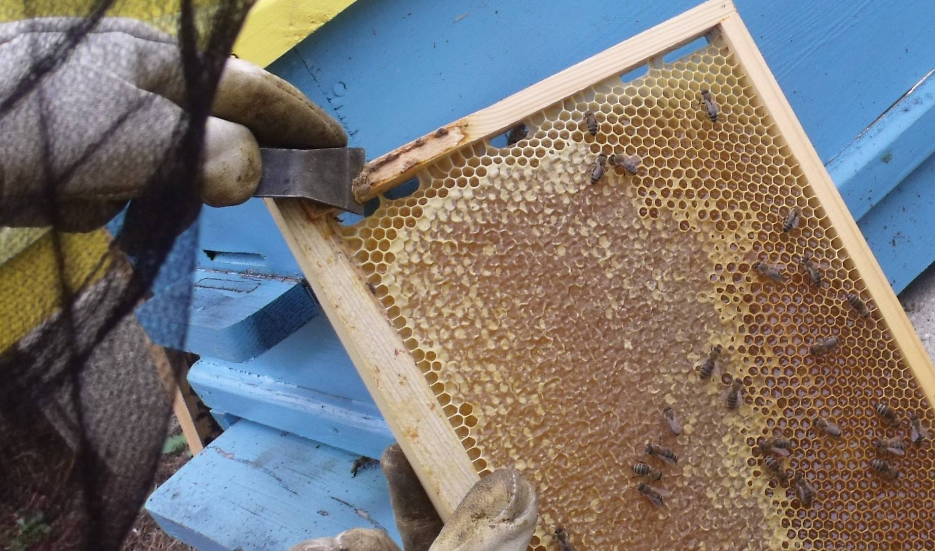 radihoney български мед